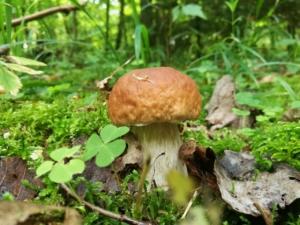 Sortie champignons (ANNULÉE)